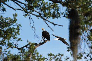 eagles-comp-web